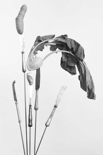 Life on stake is an analogue black and white series on medium format and printed on silvergelatin, glass and silkpaper. It showes vegetables and cuttlery on metal sticks. It tries to rise awerness of the importance to eat more vegetables and less meat in times of the climate crisis, global warming, climate change